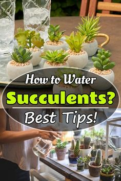 Jade Succulent, Succulent Outdoor, Succulent Care, Outdoor Plants, Succulent Plants, Cacti, How To Water Succulents, Types Of Succulents, Planting Succulents
