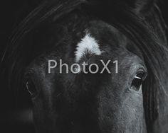 Horse Photography Horse Art Digital Download by PhotoX1 on Etsy Horse Photography, Horse Art, Horses, Digital, Etsy, Animals, Animais, Animales, Animaux
