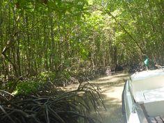 Boottocht door het mangrovebos