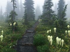 Beargrass in the fog by tweetsandchirps