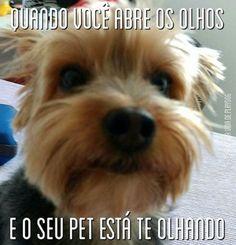 MELHOR JEITO DE ACORDAR! <3 <3 <3 #petmeupet #cachorro #filhode4patas #maedecachorro #paidecachorro #maedepet #paidepet #gato #petshop