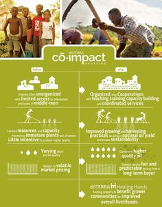 An Example of Co-Impact Sourcing An example of co-impact sourcing is where Vetiver comes from. doTERRA chose Haiti as the location to source it's Vetiver from because it has high levels of vetiverols and vetiverones. The people they are working with are the only people that have been able to identify a hydro diffusion process. You would need to travel 5 hours outside of Port Au Prince in Haiti to arrive to a small town called Les Cayes that does not have running water but is a beautiful…