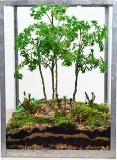 Сад в миниатюре. Террариум.. Обсуждение на LiveInternet - Российский Сервис Онлайн-Дневников