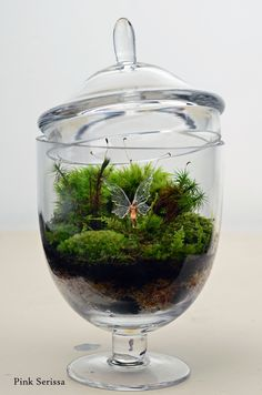 Lush green live moss terrarium in miniature apothecary jar with fairy