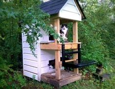 Outside cat enclosure for the kitties needing a home outside OR for inside cat enclosure. Feral Cat House, Feral Cat Shelter, Outdoor Cat Shelter, Cat House Diy, Outdoor Cats, Feral Cats, Cat Shelters, Kitty House, Outdoor Play