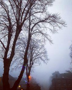 Fog. #london #2016 #december #fog #Tree #fuckoff2016 #iphone7plus