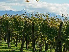 Vignes du Jurançon et Pyrénées