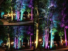 uplighting in trees Dramatic Lighting, Event Lighting, Tree Lighting, Lighting Ideas, Tree Wedding, Garden Wedding, Wedding Reception, Summer Solstice, Landscape Lighting