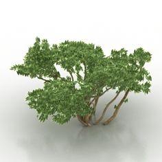 Download 3D Bush
