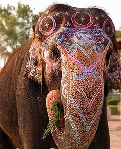 national geographic painted elephants