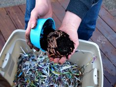 Here's a neat Earth Day project, vermicomposting. It wasn't that long ago I heard about vermicomposting for the first time. Composting At Home, Earth Day Projects, Worm Farm, Earthworms, Bonsai Plants, Decks And Porches, Organic Farming, Home Remedies, How To Dry Basil