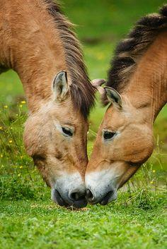 Paarden ♥♡♥