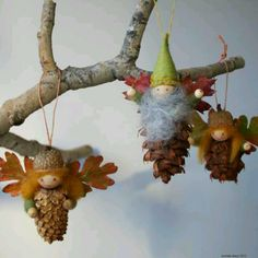 Pinecones........pic only