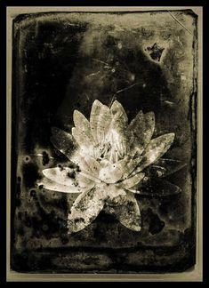Arte Grunge, Photocollage, Forest Fairy, Fairy Art, Art Deco, Aesthetic Art, Wall Collage, Art Inspo, Painting