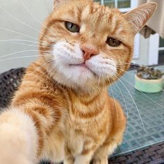 Do you also like cats very much? Cutest Kittens Make Us Feel Good. Cats don't bother you too much. Cute Cats And Kittens, Baby Cats, I Love Cats, Kittens Cutest, Cute Funny Animals, Cute Baby Animals, Funny Cats, Diy Funny, Cat Selfie