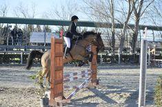 Cavallo da salto Bradley Mountain, Horses, Animals, Italia, Animales, Animaux, Animal, Animais, Horse