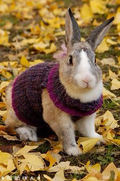 Bunny Rabbit wearing a Sweater