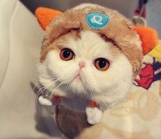 #Snoopythecat foto moda gatti