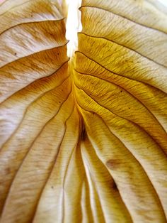 Leaf detail by FeeMail, via Flickr