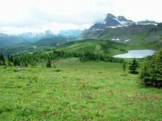 #hiking Healy Pass in Banff National Park, Alberta, Canada