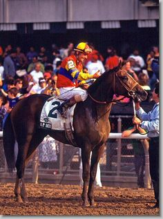 INDY (USA) Dk b/br c Seattle Slew - Weekend Surprise. 1992 Belmont Stakes winner and later, leading sire. One of his get was Pulpit, paternal grandsire of California Chrome. (Photo by Mark Wyville). Kentucky Horse Park, Kentucky Derby, Saratoga Horse Racing, The Belmont Stakes, Sport Of Kings, Thoroughbred Horse, Racehorse, Horse Pictures, Courses