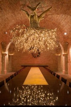 Tree root chandelier in Hall Vineyard, Napa Valley