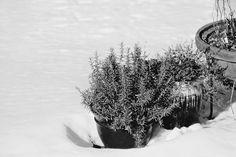 Youllshootyoureyeout: Cloak of winter...