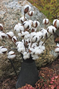 Ships Free 5-20 Natural Cotton Bolls Cotton Boll by TheWreathShed