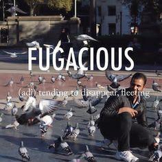 Fugacious |fjʊˈgeɪʃəs| mid 17th century origin from Latin fugax,fugac- (from fugere 'flee') + -ious #beautifulwords #wordoftheday #Barcelona #catalunyasqaure