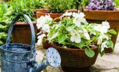 Καταπληκτικό κόλπο! Δοκιμάστε το και δείτε τα φυτά σας να μεγαλώνουν στο άψε-σβήσε! Indoor Garden, Home And Garden, Garden Works, Tower Garden, Urban Farming, Watering Can, Mykonos, Diy Flowers, Agriculture