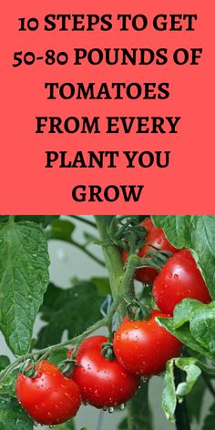 Growing Vegetables In Pots, Container Gardening Vegetables, Planting Vegetables, Growing Tomatoes, Growing Plants, Tomato Garden, Vegetable Garden Design, Fruit Plants, Tomato Plants