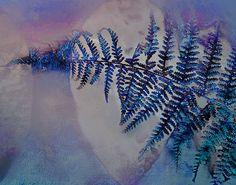 Indigo blue violet fern, nature photograph modern rustic photograph surreal purple cyan botanical photograph woodland modern minimalist