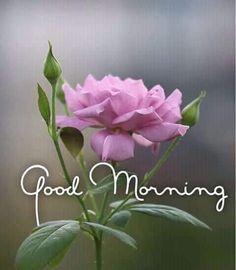 Beautiful Good Morning Wishes, Good Morning Images Flowers, Good Morning Picture, Good Morning Good Night, Morning Pictures, Good Morning Greeting Cards, Morning Greetings Quotes, Good Morning Messages, Morning Prayers
