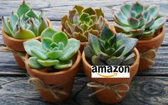 Love Succulents? Sign up today & win our beautiful assorted succulent collection http://upvir.al/ref/10470724 via @onlingardncentr