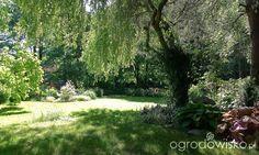Ogród dla Agusi - strona 206 - Forum ogrodnicze - Ogrodowisko