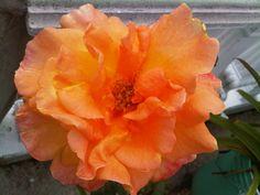 Rosa como falda de china oaxaqueña en la guelaguetza.