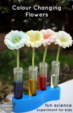 Learn about transpiration in nature with this colour changing (dying) flowers experiment from Go Science Girls. Science Ideas for kids, Cool Science Experiments, Science Fair Projects, Science For Kids, Summer Science, Science Ideas, Science Experiments For Preschoolers, Science Week, Science Chemistry, Diy Projects