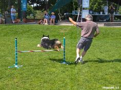 5 dog-friendly summer events in southern Maine - mainetoday - L.L. BEAN DOG DAYS OF AUGUST / PAWS FOR A CAUSE