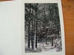 Hey, I found this really awesome Etsy listing at https://www.etsy.com/listing/91324104/photo-note-cards-set-of-6-series-winter