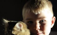 Siberian cat and boy