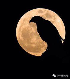 帶去一份思念 愿你在哪儿一切安好#The moon#[月亮]