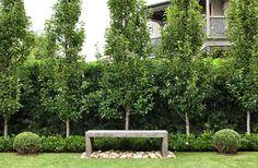 Podocarpus falcatus hedge. Pyrus ussuriensis with low Gardenia 'Florida' hedge. Custom Australian hardwood bench with nepean random pebbles, framed by Buxus balls. Randwick, NSW Australia. Anthony Wyer + Associates www.anthonywyer.com