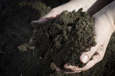You know how they say gardening is cheap therapy? Soil microbes have been found to have similar effects on the brain as Prozac without side effects and chemical dependency. http://www.gardeningknowhow.com/garden-how-to/soil-fertilizers/antidepressant-microbes-soil.htm No time to get your hands dirt? Try injections of soil bacteria: http://discovermagazine.com/2007/jul/raw-data-is-dirt-the-new-prozac