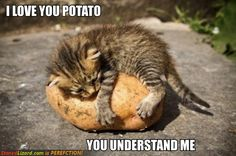 I have a cat that plays with potatoes. Glad to see he's not alone