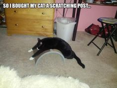 So i brought my cat a scratching post...