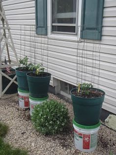 Our Garden Path-wicking water with pots experiment.....