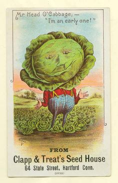 """Hartford, CT late 1800's vegetable people trade card - cabbage - Clapp & Treat   A 3"""" x 5"""" advertising trade card from the late 1800's from Clapp & Treat Seed House. Condition is very fine.  Sold $31.99 on 12/27/14"""