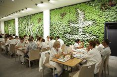 Pflanzenwand Lounge