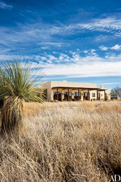"""""""I'm not buying land now,"""" Turner says. """"I've got enough, though I may buy adjacent pieces of property for bison."""" People gather on the west patio to watch the sunsets. Landscape architect Jennifer Bear used native plants, including soaptree yucca, black grama grass and tobosa grass."""