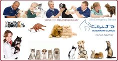 Staffed with ten veterinary surgeons and working in three different surgical centers with twelve nurses, seven trainees and an animal technician among others, we here at AlphaPet Veterinary Clinic are dedicated to providing your pet with the best care that they can receive from vets in Chichester. http://alphapet.co.uk/